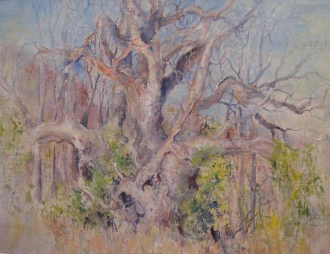 Baoab Camp W.A